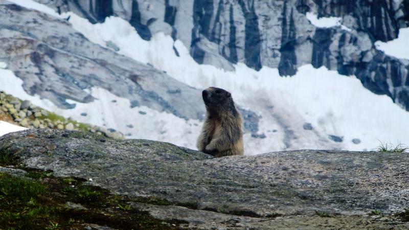 pasja gora alpy Grossvenediger (8)
