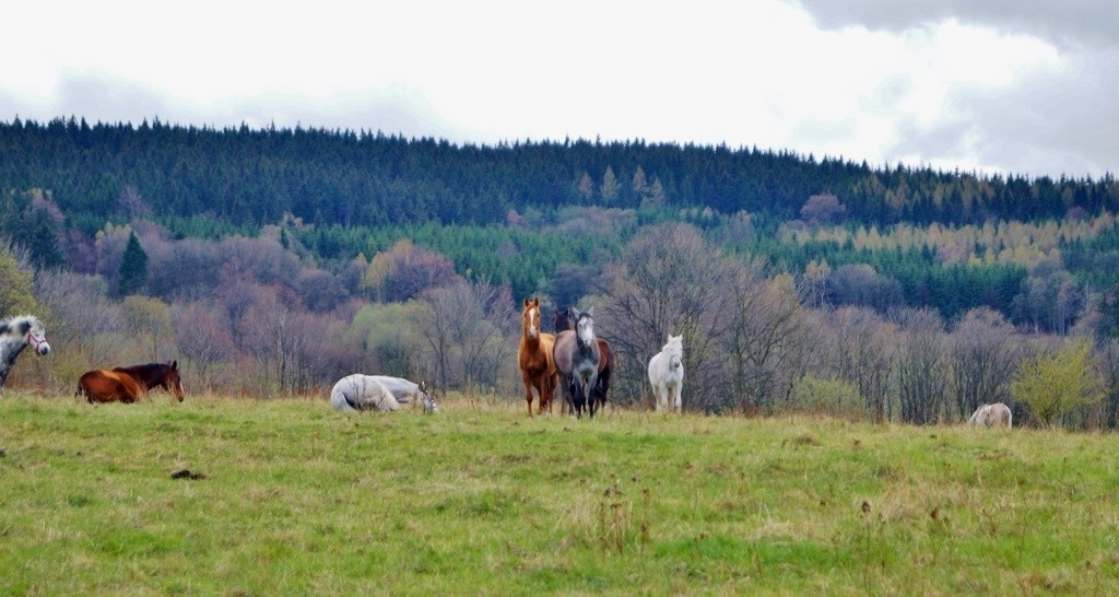mniszkow rudawy janowickie konie gory pole