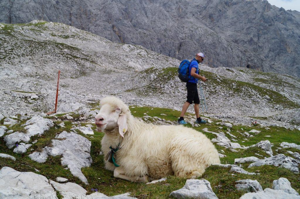 Zugspitze Niemcy gory pasja gora wroclaw szczyt wyprawa bieg bieganie trening (28)